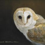 Richard Whittlestone: Wildlife Artist